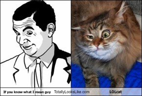 If you know what I mean guy Totally Looks Like LOLcat