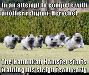 In an attempt to compete with another religion, Herschel   The Hannukah Hamster starts training his sleigh team early