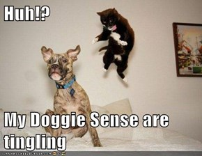 Huh!?  My Doggie Sense are tingling