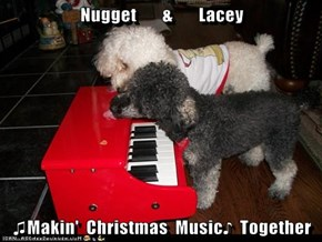 Nugget       &       Lacey  ♫Makin'  Christmas  Music♪  Together