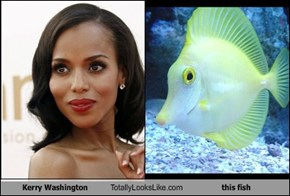 Kerry Washington Totally Looks Like this fish