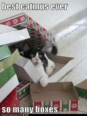 best catmus ever  so many boxes