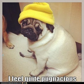 I feel quite pugnacious