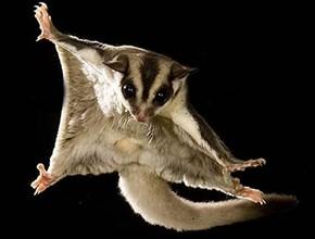 Squee Spree: Gliding