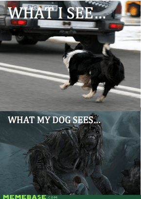 Why dogs chase cars...