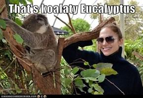 That's koalaty Eucalyptus
