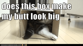 does this box make my butt look big