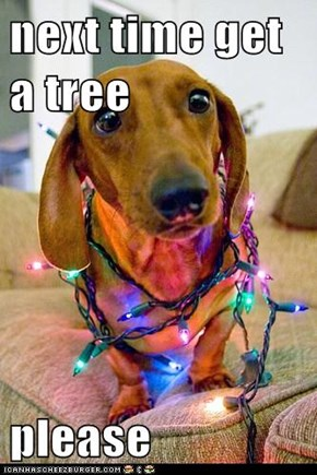 next time get a tree   please