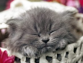 Cyoot Kitteh of teh Day: Sweet Slumber