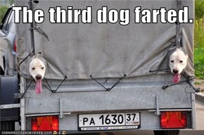 The third dog farted.