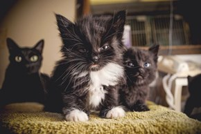 Cyoot Kittehs of teh Day: When I Grow Up, I Wanna Be Just Like Grumpy Cat!