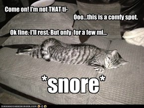 I'll just rest for a few... *snore*