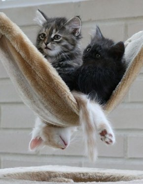 Cyoot Kittehs of teh Day: Just Hangin' Out