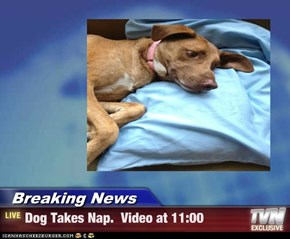 Breaking News - Dog Takes Nap.  Video at 11:00