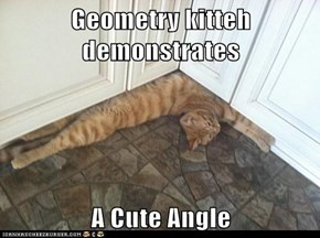 Geometry kitteh demonstrates  A Cute Angle