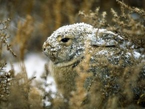 Bunday: Snow Dusted