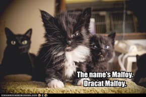 Harry Potter Kitty Version