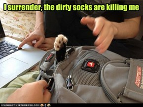 I surrender, the dirty socks are killing me