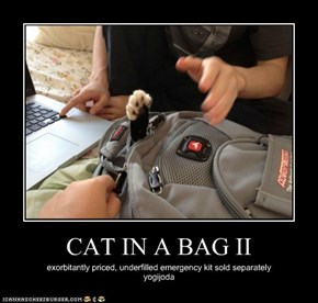 CAT IN A BAG II