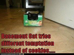 Basement Cat tries different temptation instead of cookies.....