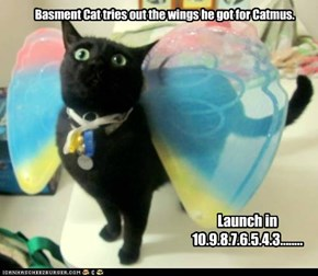 What idiot gave Basement Cat wings?