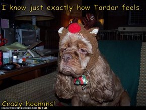 I know just exactly how Tardar feels.  Crazy hoomins!