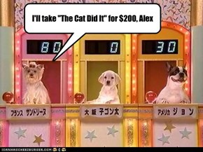 """I'll take """"The Cat Did It"""" for $200, Alex"""