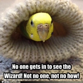No one gets in to see the Wizard!