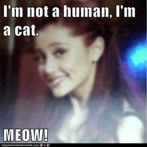 I'm not a human, I'm a cat.  MEOW!