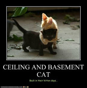 CEILING AND BASEMENT CAT