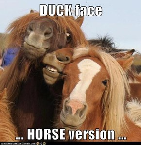 DUCK face  ... HORSE version ...