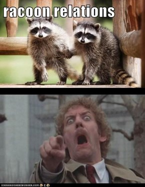 racoon relations