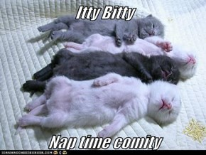 Itty Bitty   Nap time comity