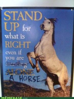 Horses Have Morals Too