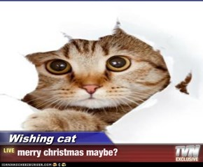 Wishing cat - merry christmas maybe?