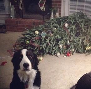 I'm Sorry I Ruined Christmas :(