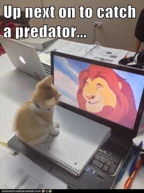 Up next on to catch a predator...