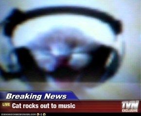 Breaking News - Cat rocks out to music