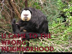 U CAME TO THE WRONG NEIGHBORHOOD