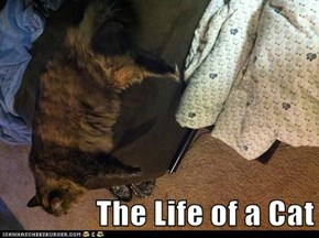 The Life of a Cat
