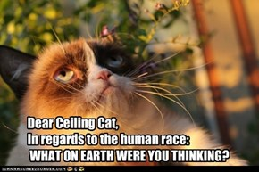 Grumpy Cat Needs Answers