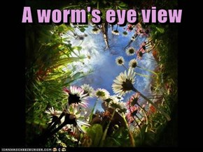 A worm's eye view