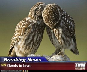 Breaking News - Owels in love.