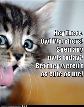 Hey there,                                                         Owl Watchers!                                                          Seen any                                                            owls today?