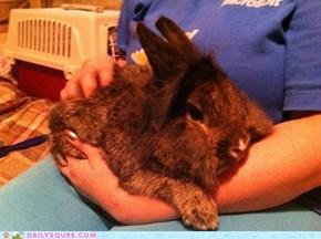 Cuddly wuddly bunny
