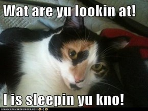 Wat are yu lookin at!  I is sleepin yu kno!