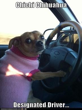 Chichi Chihuahua  Designated Driver...