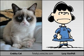 Crabby Cat Totally Looks Like Lucy VanPelt