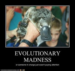 EVOLUTIONARY MADNESS