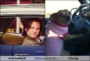Jared Padalecki Totally Looks Like This dog
